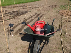Before my tap was installed I filled up watering cans from the sheep trough at the far end of the field! May 2014