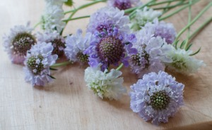 Beautiful pastels perfect for a posy